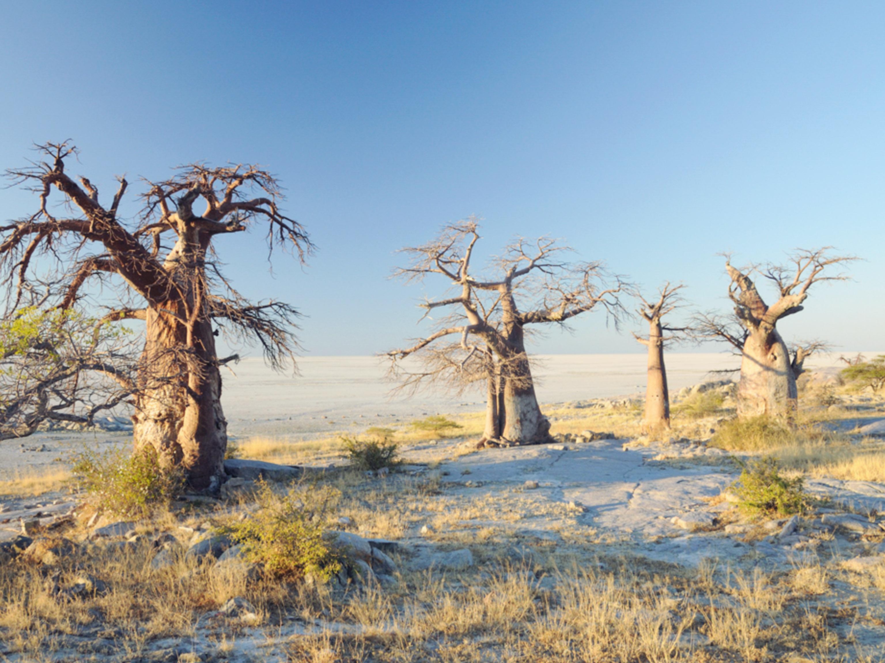 Makgadikgadi & Nxai Pans Botswana