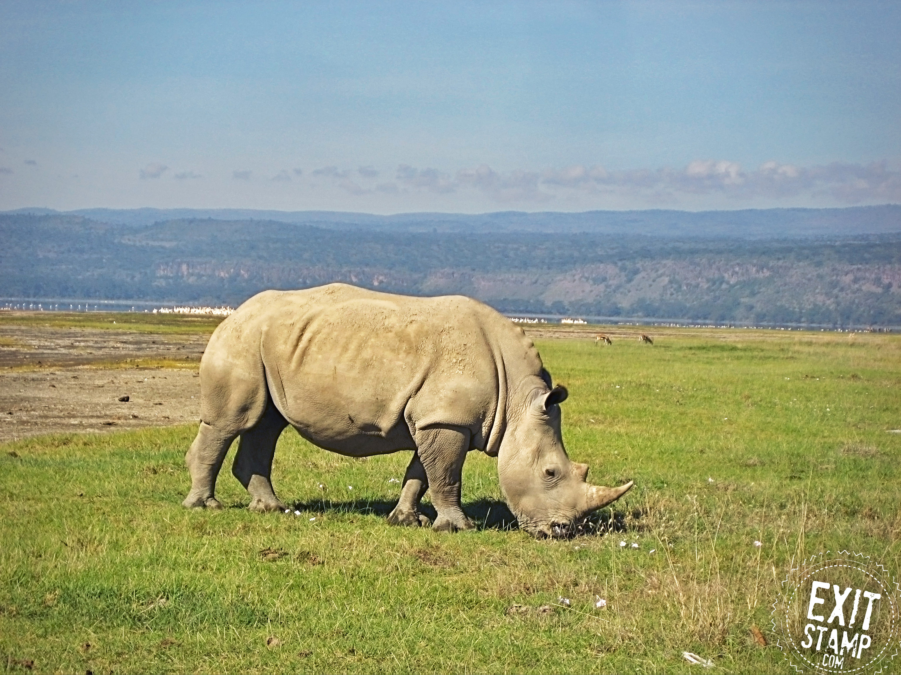 Nakuru Kenya Safari White Rhino