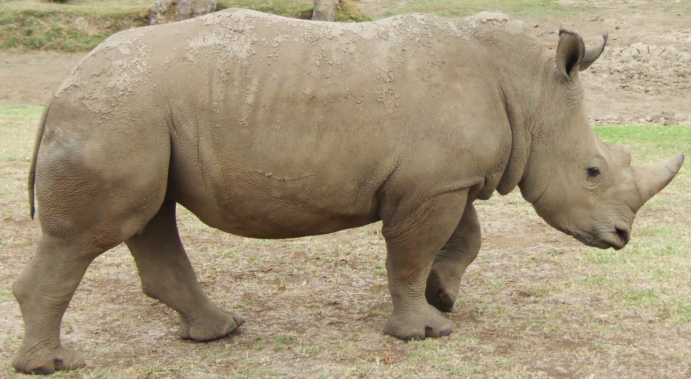 Mkhaya Game Reserve Swaziland Rhino