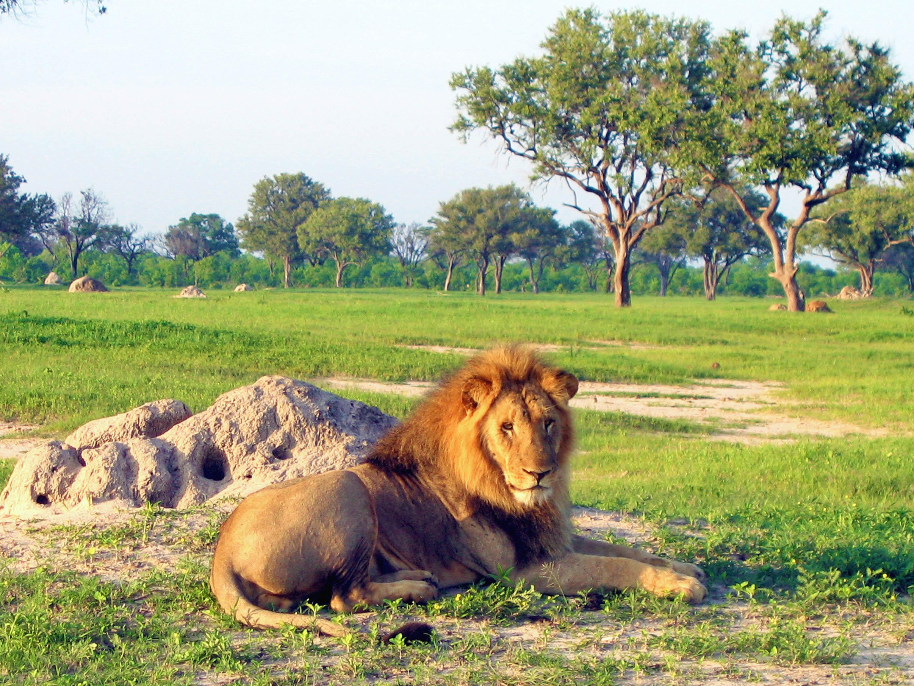 Hwange Zimbabwe