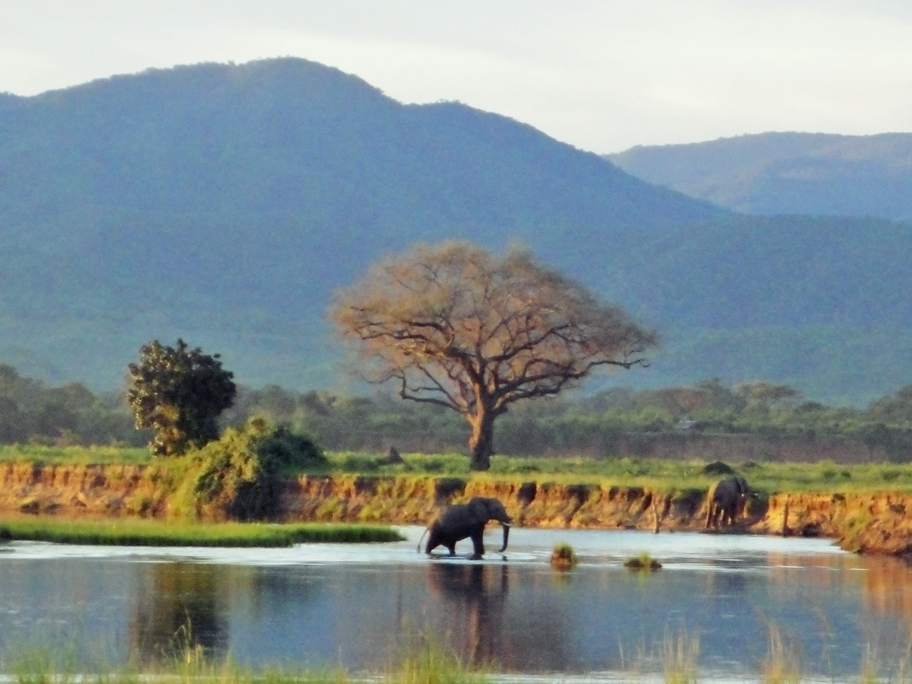Mana Pools Zimbabwe