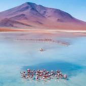 🗻 Relaxing with flamingos on the Altiplano of Bolivia. (📸: @_romanmoran 📍: #Bolivia🇧🇴 ) . . . #southamerica #boliviatravel #bolivia #bolivie  #travellovers #discoversouthamerica #mochileros #mochilero #mochileiro #pachamama #voyageursdumonde #voyageur #voyages #voyaged #viaggi #viaggiare #mochilando #blogmochilando #cntraveller #lonelyplanetfr #voyager #roamtheworld #voyagevoyage #voyageurdumonde #roam #wanderers #modernoutdoor
